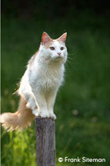 Whiite cat sitting on a post