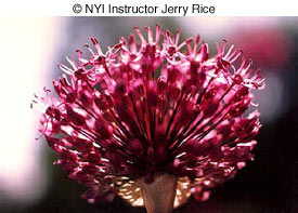 © NYI Instructor Jerry Rice