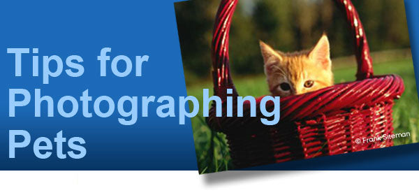 How to Photograph Pets Header