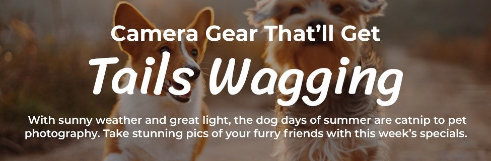 Pet Photography Gear Sale