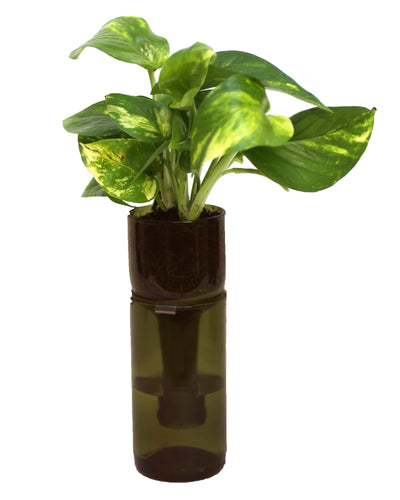 Self Watering Planter: plain or engraved