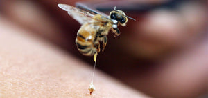 The Amazing Benefits of Bee Venom