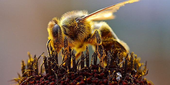 How to help save the bees!