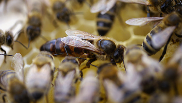 6 Things You Never Knew About Royal Jelly