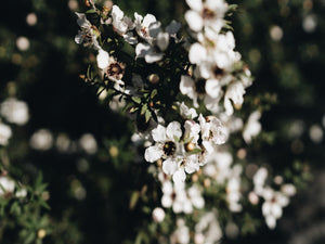 Scientific Research around the natural health benefits of Manuka