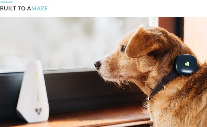 Track Your Pets' Location 24/7 From Anywhere