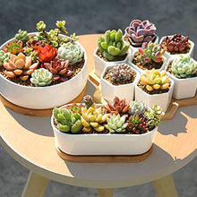 Load image into Gallery viewer, Yeah Plants Succulent Plants Live 6 Pack of Assorted Rosettes Succulents Fully Rooted in 2'' Planter Pots with Soil, Hand Selected Variety Pack of Mini Live Succulents Cactus Indoor Outdoor Easy Care Plants