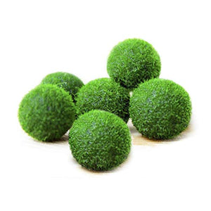 Nano Luffy Marimo Moss Balls, Unique Green Spherical Plants, Create Legendary Lush Landscape in Your Aquarium, Natural Habitat for Triops/Sea Monkeys, Perfect Décor, Thrive with Minimal Care, 6-Pieces