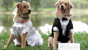 PET MINDING for Special Events