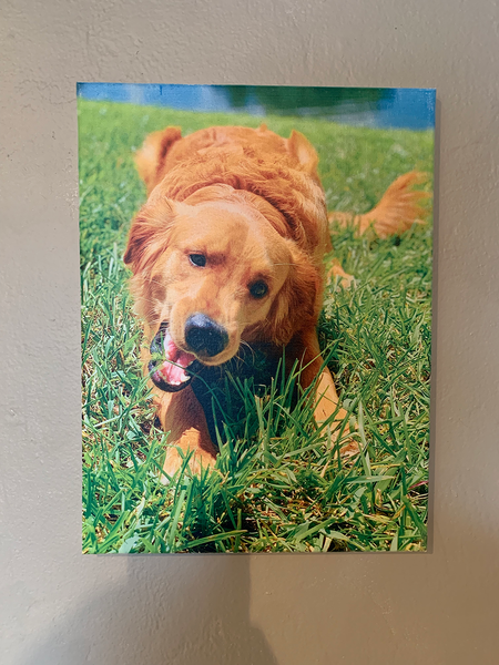 Golden Retriever dog canvas