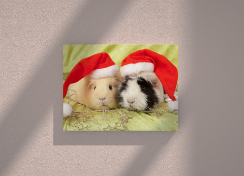 Hamsters Christmas edition canvas