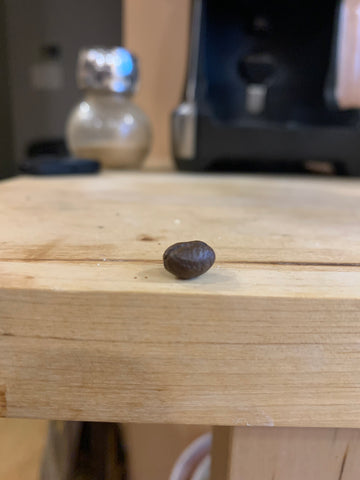 Peaberry coffee bean