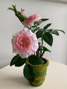 Blooming roses in fuzzy pot