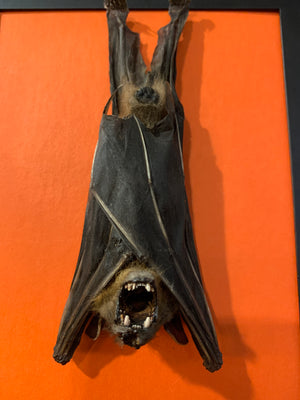 Orange and black bat lamp