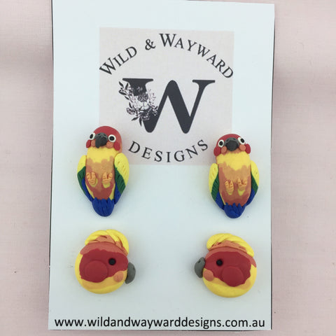 Sun Conure Custom Set