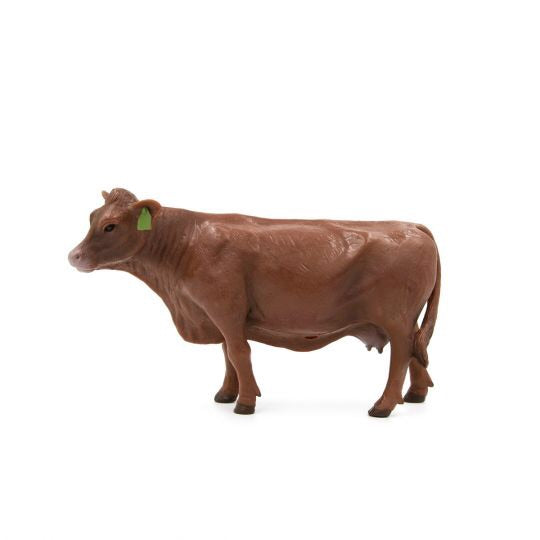 Little Busters Red Angus Cow