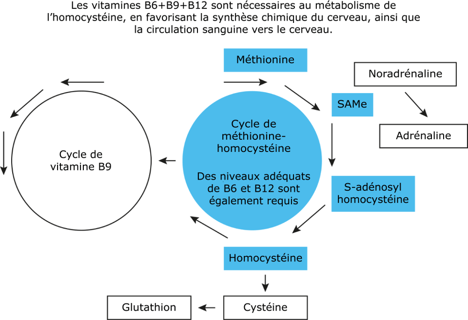 B6+B9+B12 Reduces Homocysteine