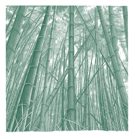 'Bamboo Grove, Kyoto' Sage Green Colour Ink-Jet Print