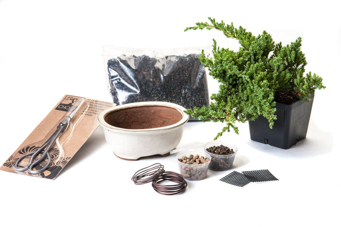 Bonsai starter kit with juniper tree