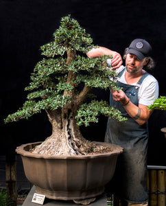 Introduction to Bonsai Course (Melbourne)