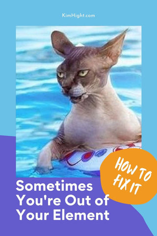 Cats, Turtles, and Swimming Pools