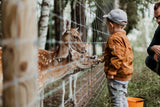 boy petting deer at a zoo