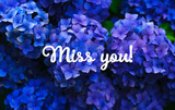 Missing You Hydrangeas - Card & Box of Candy