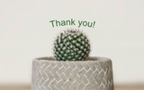 Thank You Cactus - Card & Box of Candy