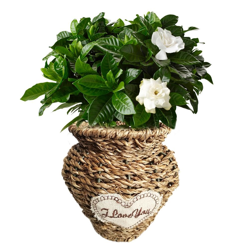 Pastoral Straw Braided Flower Basket Iron structure Grass Woven Craft Flower Arrangement Potted Plant Flower Baskets