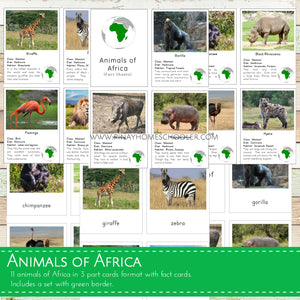 Animals of Africa Montessori  3 Part Cards with Fact Cards