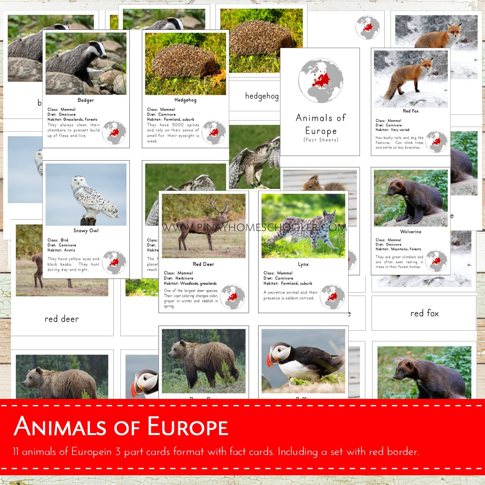 Animals of Europe Montessori 3 Part Cards and Fact Cards