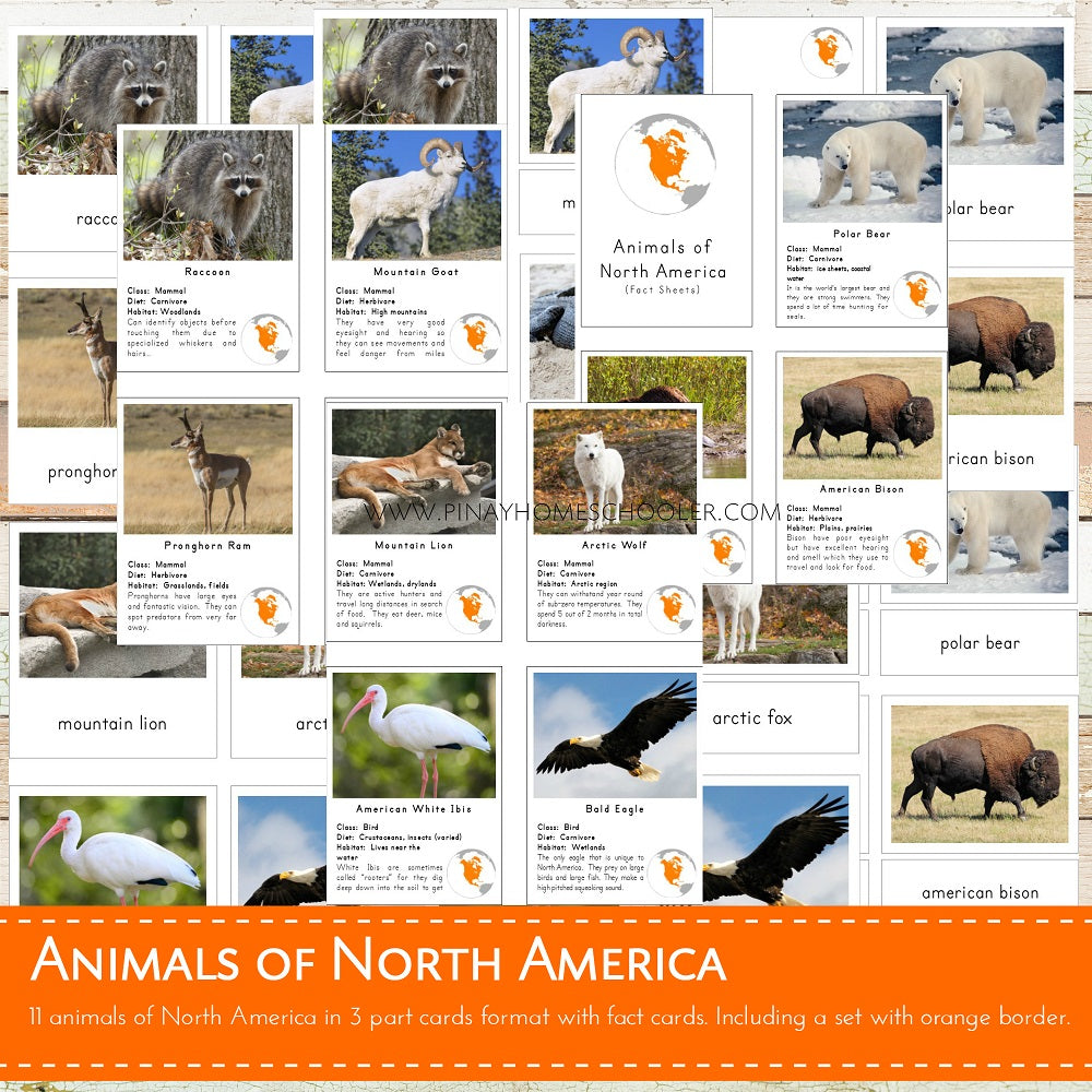 Animals of North America Montessori  3 Part Cards and Fact Cards