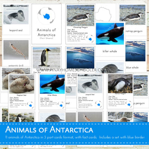 Animals of Antarctica Montessori 3 Part Cards and Fact Cards