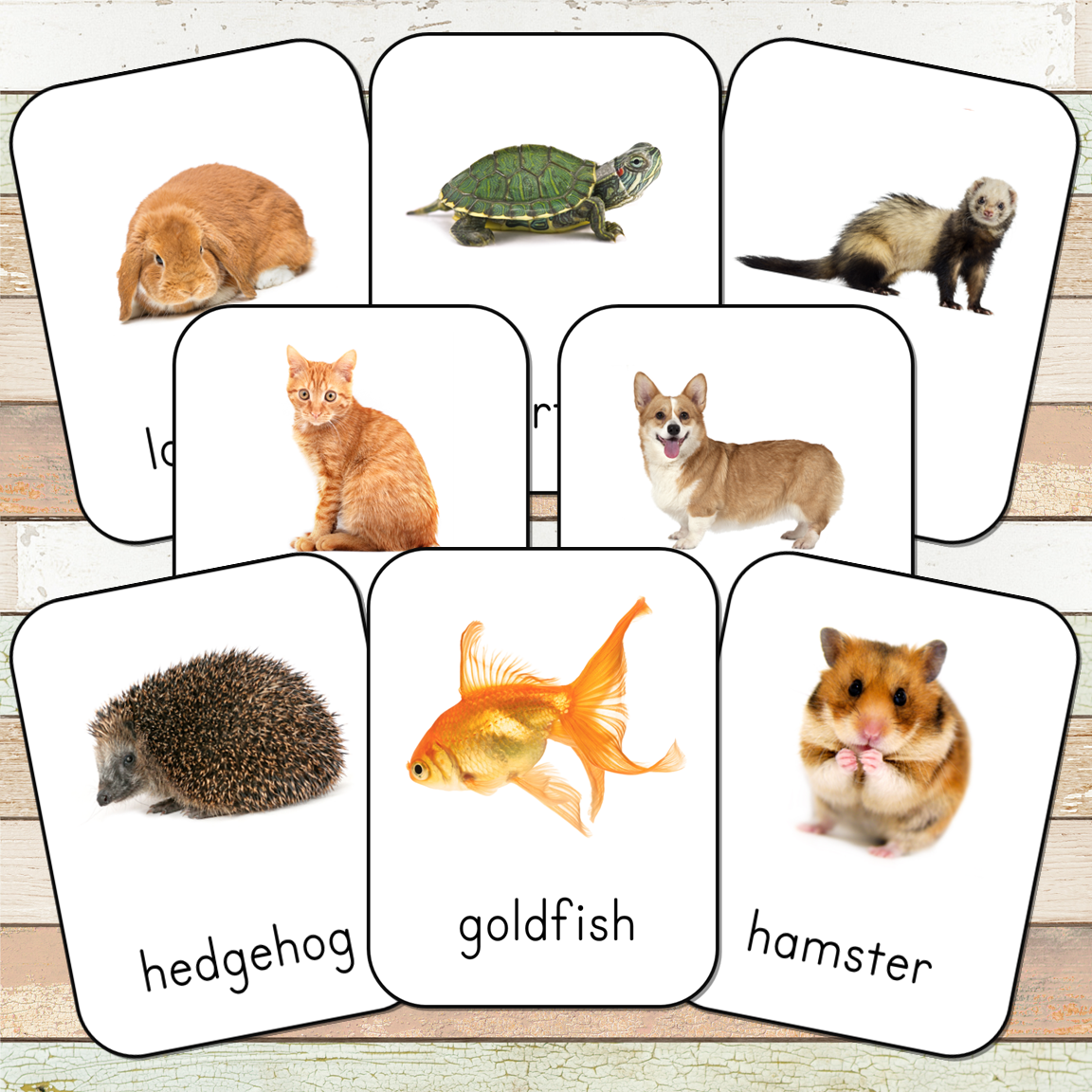 Montessori Pets Toob 3 Part Cards
