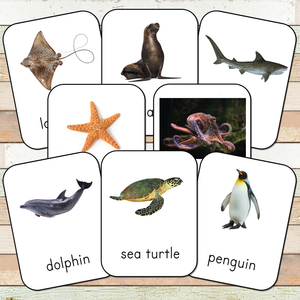 Montessori Ocean Toob 3 Part Cards