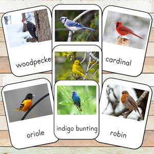 Montessori Backyard Birds 3 Part Cards