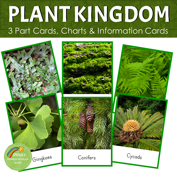 Montessori Plant Kingdom