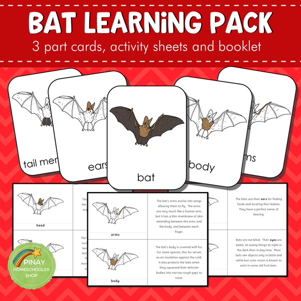 Montessori Parts of a Bat 3 Part Cards