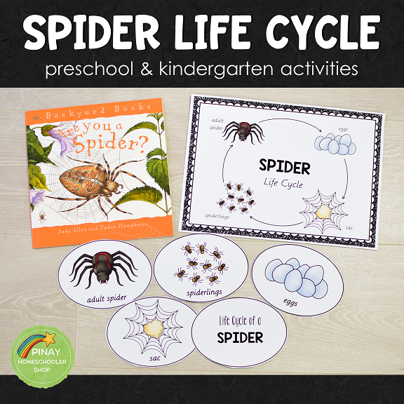 Spider Life Cycle Set - Preschool & Kindergarten
