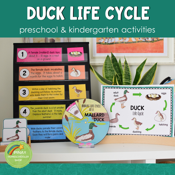 Duck Life Cycle Activity Set