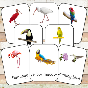 Montessori Exotic Birds Toob 3 Part Cards
