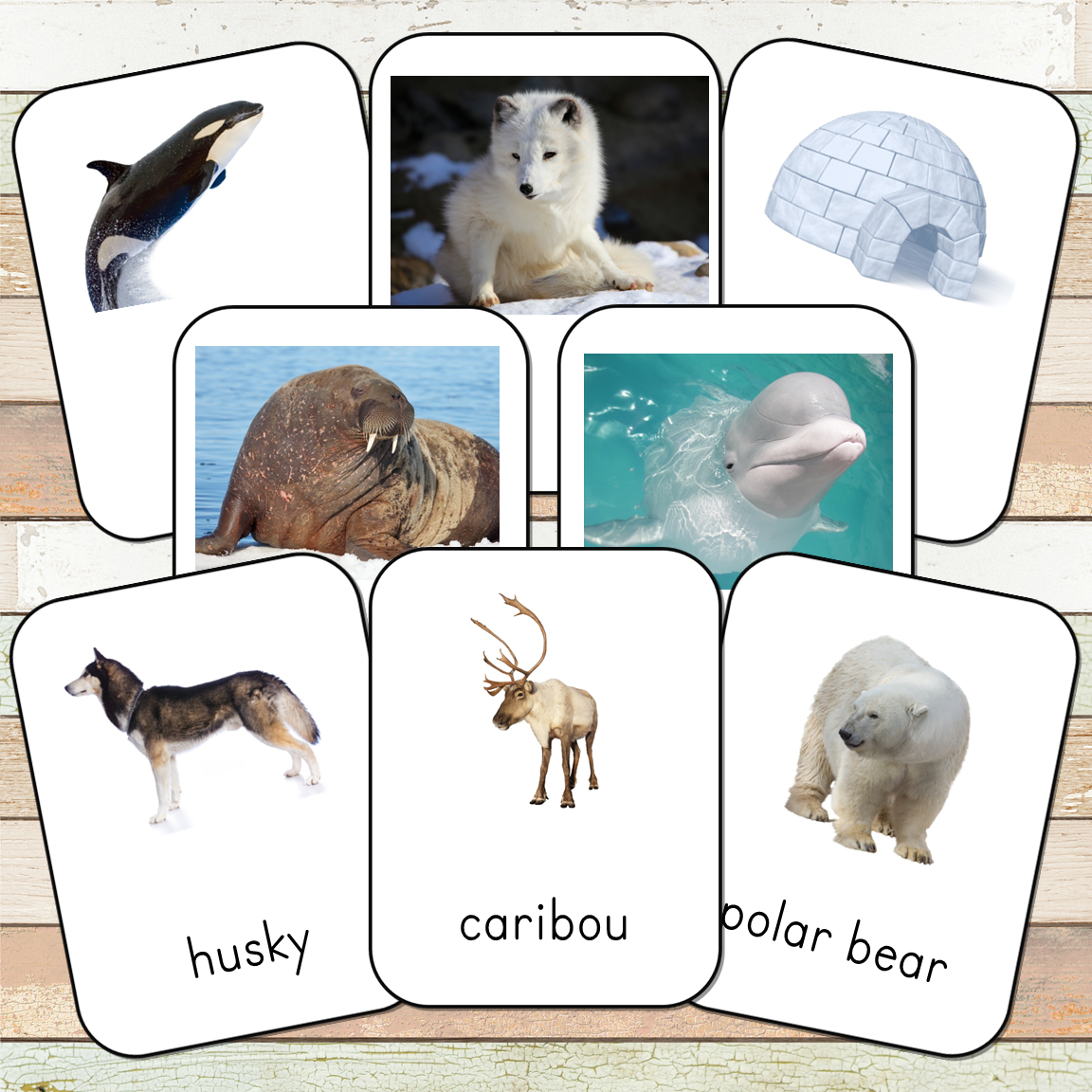 Montessori Arctic Toob 3 Part Cards
