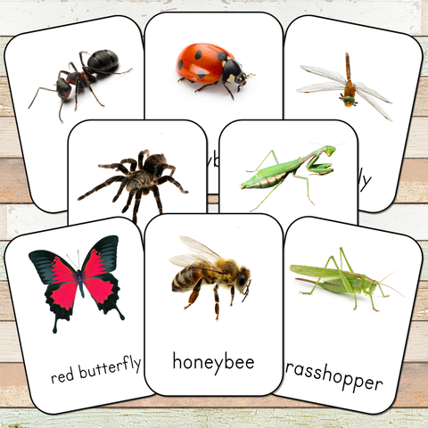 Montessori Insect 3 Part Cards