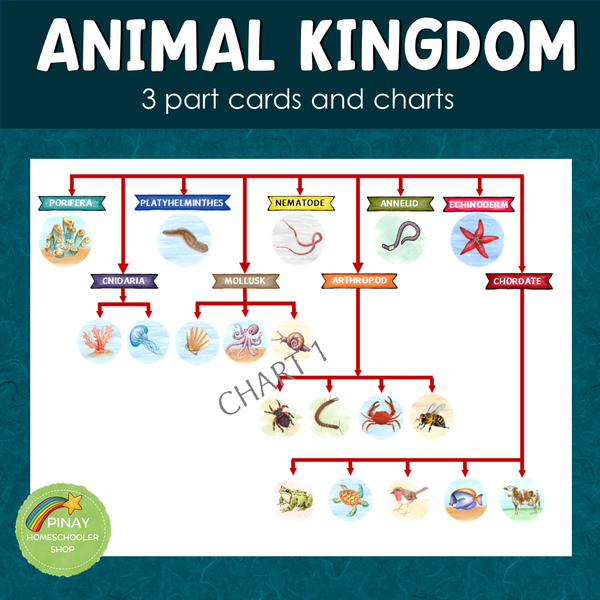 Animal Kingdom 3 Part Cards and Charts