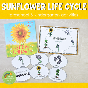 Sunflower Life Cycle Set - Preschool & Kindergarten