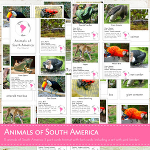 Animals of South America Montessori 3 Part Cards and Fact Cards
