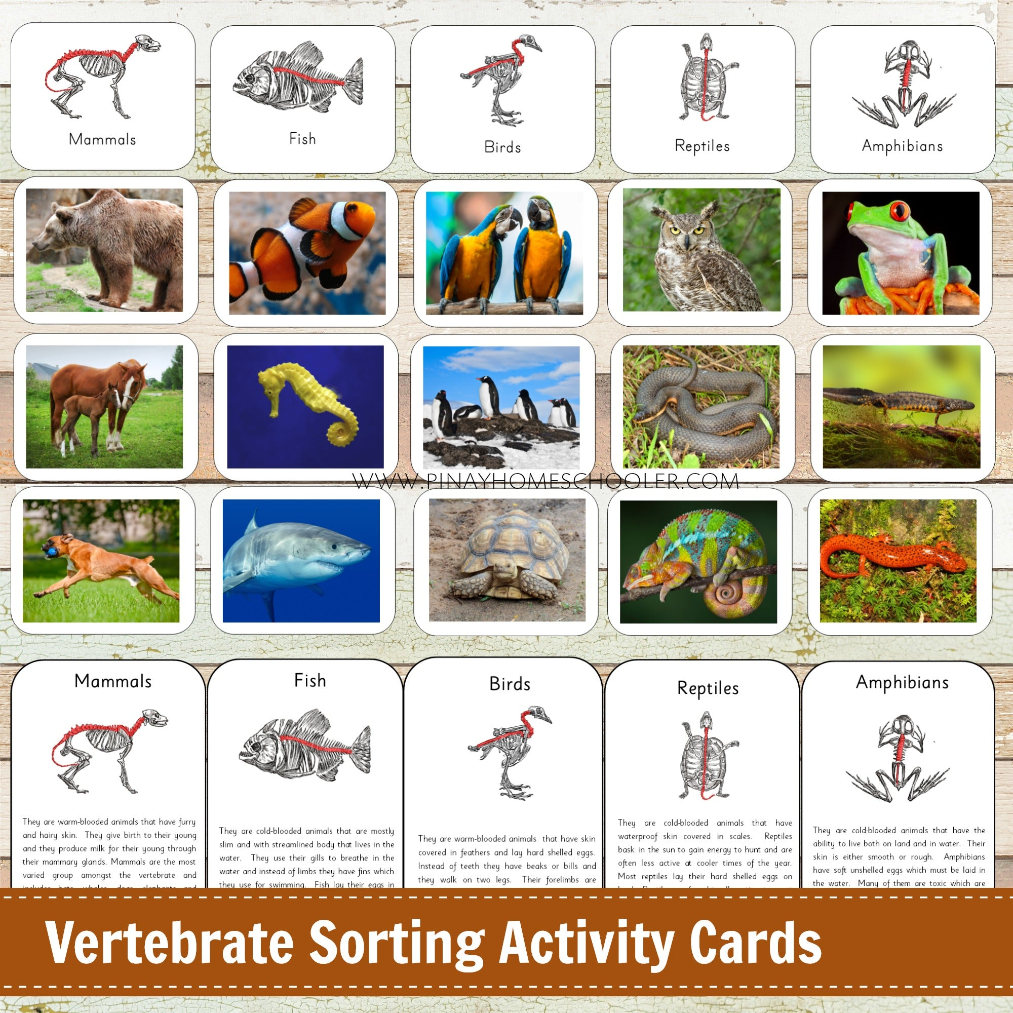 Montessori Vertebrate Sorting Activity Cards