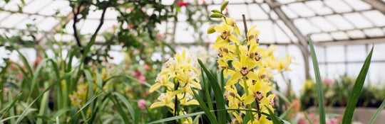 Do Orchids Need Sunlight?