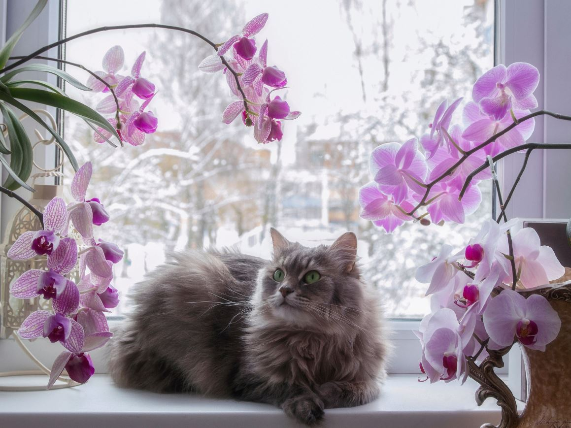 orchid and cat