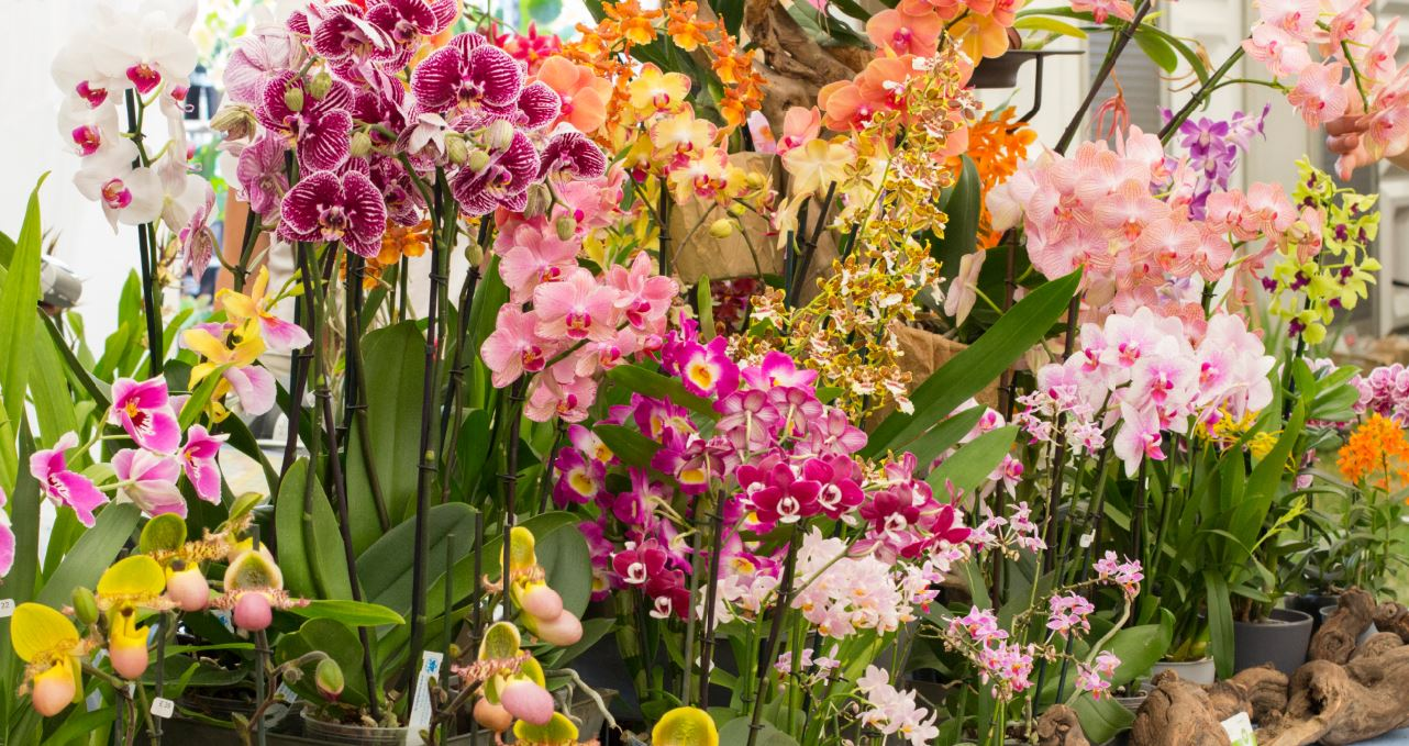 Types of orchids with pictures and names